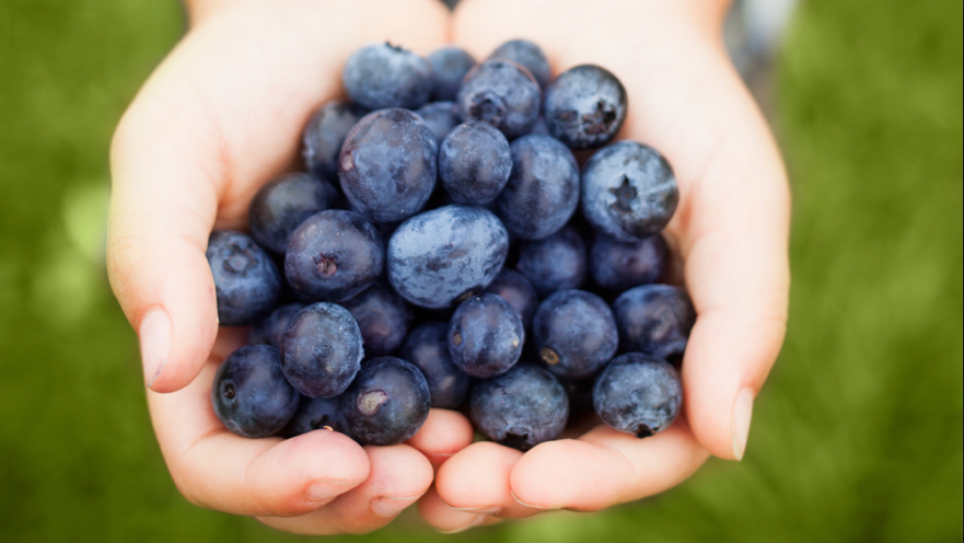 Superfoods - Blueberries